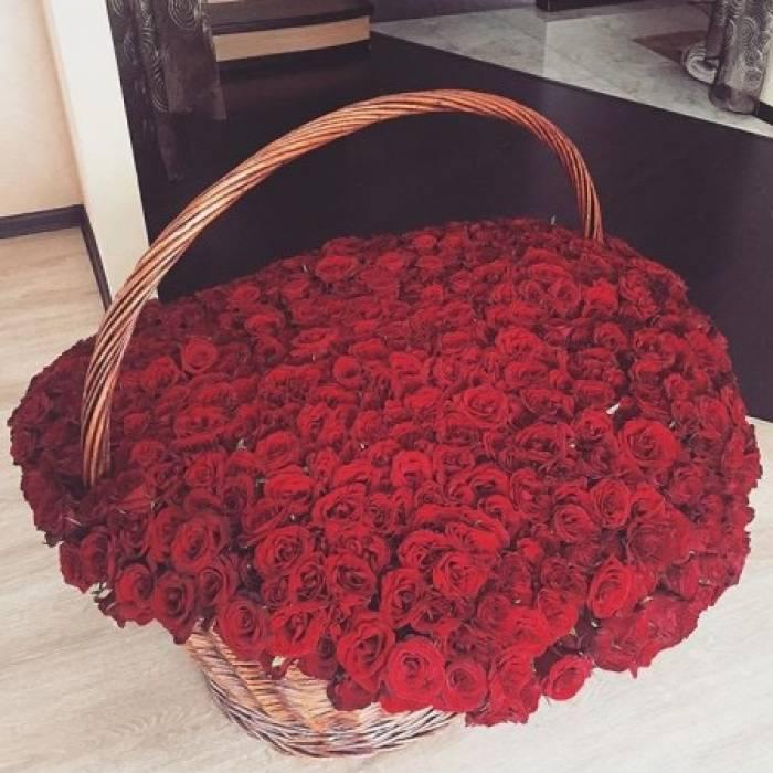 501 красная роза в корзине R926