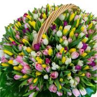 Корзина 1001 разноцветный тюльпан R016