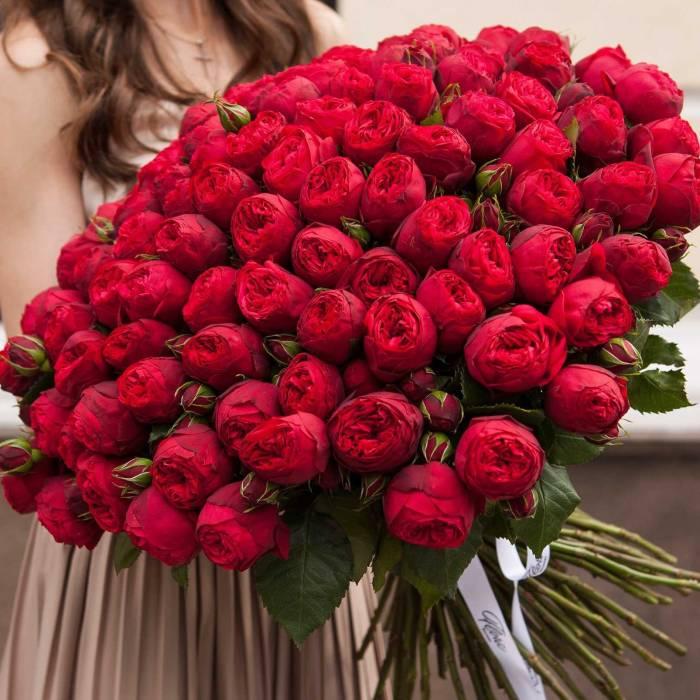 Большой букет 101 пионовидная красная роза R001