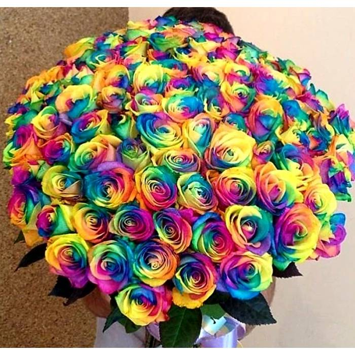 Крупные радужные розы с лентой R813